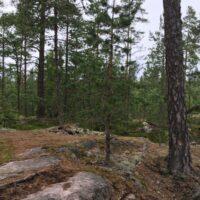 Wald bei GC72