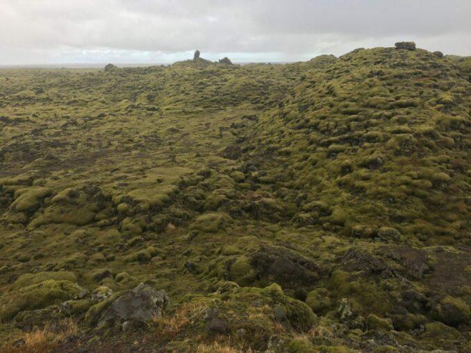 Skaftáreldahraun - Moos auf Lava