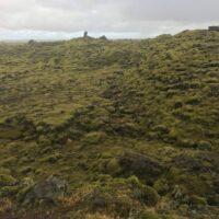 Moosbedeckte Lavafelder