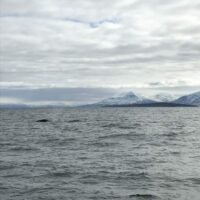 Wal im Fjord