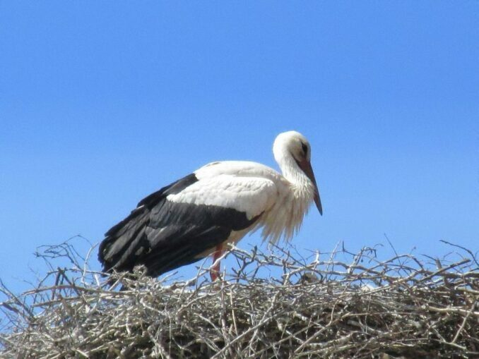 Der Storch ist das Symbol für das Elsaß